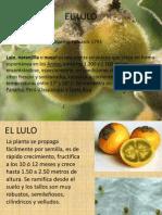 EL LULO pre