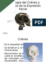 Osteologc3ada Del Crc3a1neo y Mc3basculos de La Expresic3b3n Diego