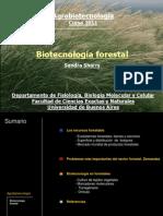 Clase 22 Biotecnologia Forestal 2011