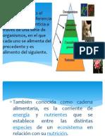 Profe_Cadenas Troficas