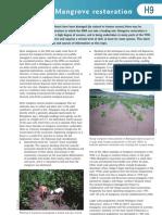 H9 Mangrove Restoration
