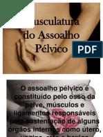 musculatura pelvica.ppt1