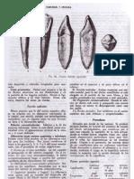 Protesis Fija Contemporanea Rosenstiel Download