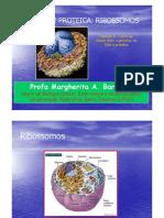 biologia ribossomos