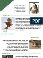 Animales en Peligro Extinción