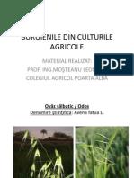 Buruienile Din Culturile Agricole