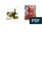 algas  y musculos