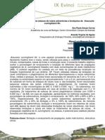 Propagação vegetativa de estacas   de Araucaria