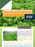 Marihuana Teratogena