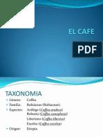 Expo Introduccion Cafe