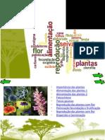 Apresentacao_plantas1