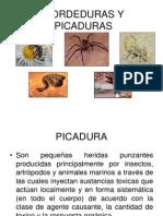 MORDEDURAS_Y_PICADURAS