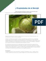 Beneficios_y_Propiedades_de_el_Borojó