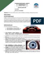 Guia de Clase No 008 Morfologia y Fisiologia Del Ojo