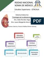 Fisiología de la aldosterona