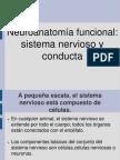 6-Neuroanatomia Funcional
