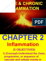 4.Acute Inflammation