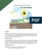 Tumbuhan Hidup Melalui Proses Fotosintesis
