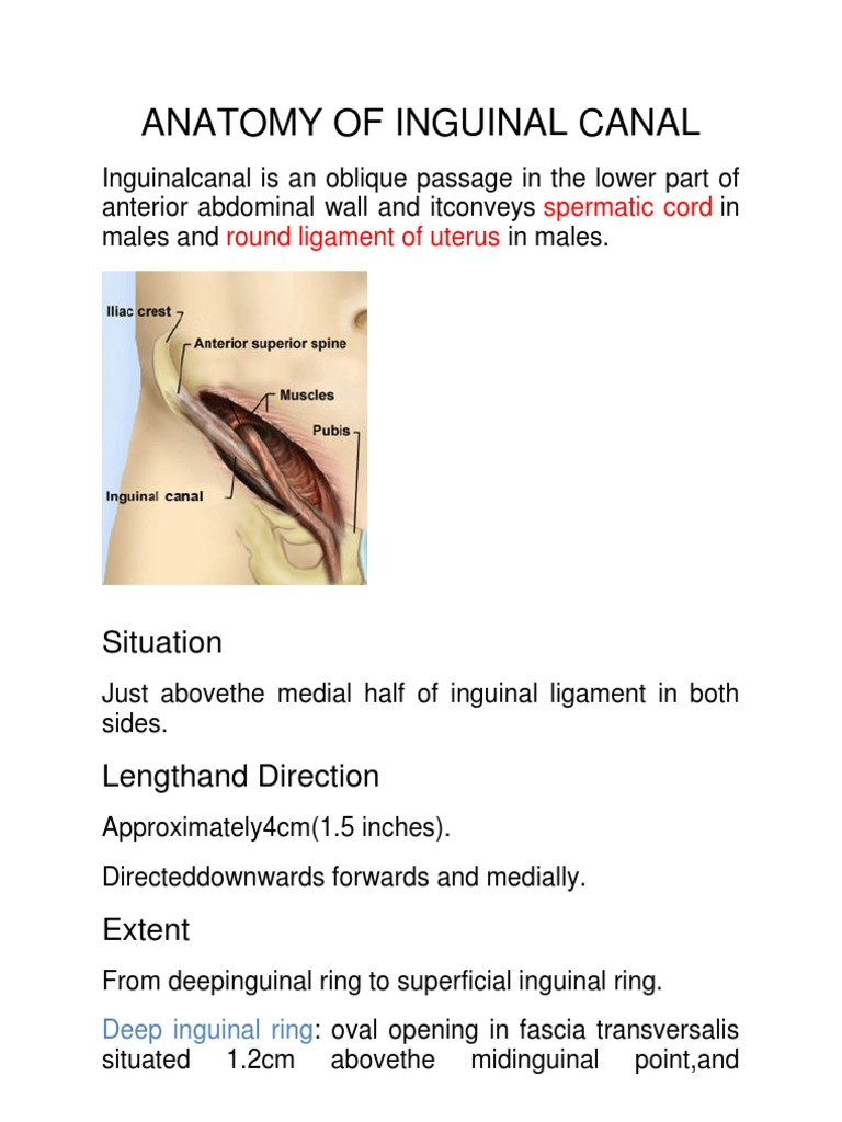 Anatomy of Inguinal Canal | Musculoskeletal System | Abdomen