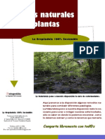 Remedios Naturales Con Plantas - Copia