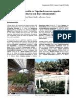 LA INTRODUCCION EN ESPAÑA DE NUEVAS ESPECIES DE PALMERAS