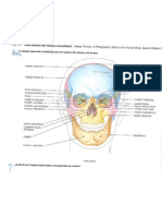 2. Cráneo. Vista anterior