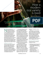 RT Vol. 9, No. 1 How a modern rice variety is bred