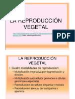 8.Lareproduccion