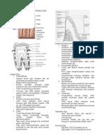 Anatomi Gigi Dan Jaringan Pendukung