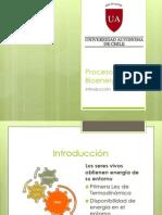 bioenergética 1