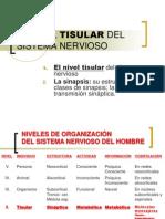 04  05 NIVEL TISULAR DE LA ACTIVIDAD PSÍQUICA PERSONAL