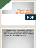 digestindecarbohidratos-090624124333-phpapp02