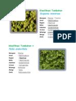Klasifikasi Tumbuhan Scapania Nemorosa