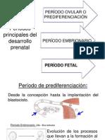 diapos de embriologia feto