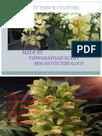 Plant Tissue Culture Pre