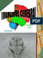 45425442 Trunchiul Cerebral (1)
