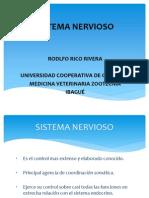 Sistema Nervioso Rico