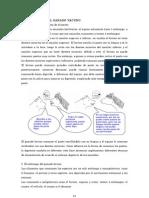 Fisiologia Del Ganado Vacuno Con Dibujos