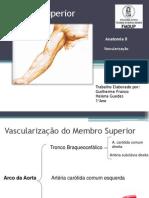 vascularizaçao braço