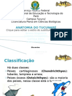 Anatomia do Tucunaré