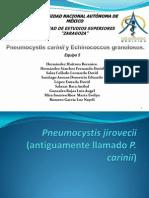 Pneumocystis Carinii y Echinococcus Granulosus