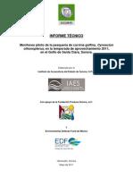 Iaes, Informe Tecnico v6 (Final 060611), Curvina