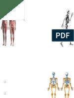 Tipos de Fibras Musculares