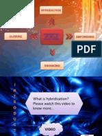 Hybridization ppt