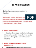 enzyme and digestion
