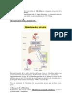 Metabolismo de La Bilirrubina