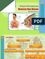 Pert 1 Organ an Manusia