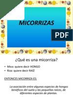 MICORRIZASYMAZ