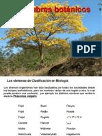 Taxonomia Botánica