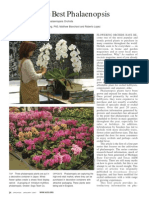 Growing the Best Phalaenopsis Part 1